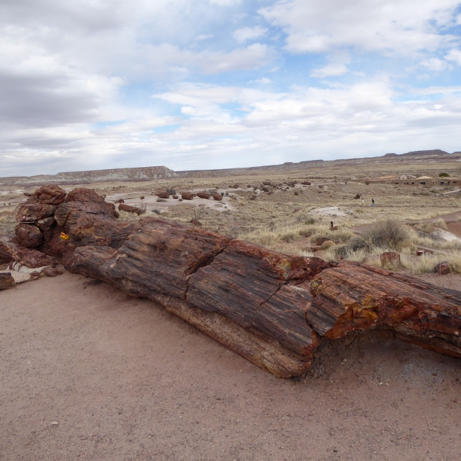 35 foot long log weighs 44 tons