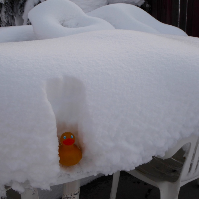 In the snow on my backyard table