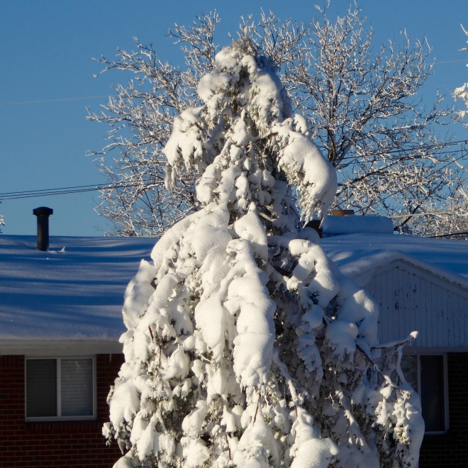 Tree blanketed in wet snow
