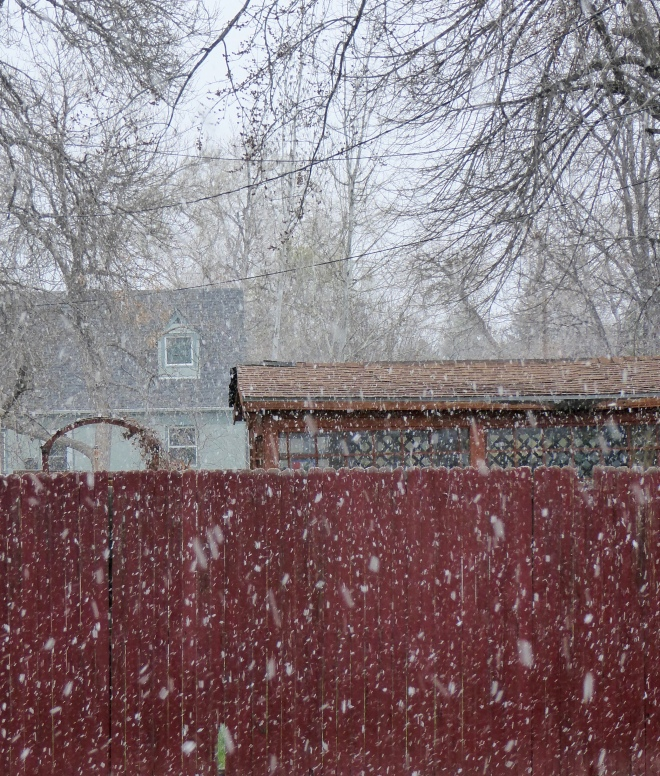 Large snow flakes today