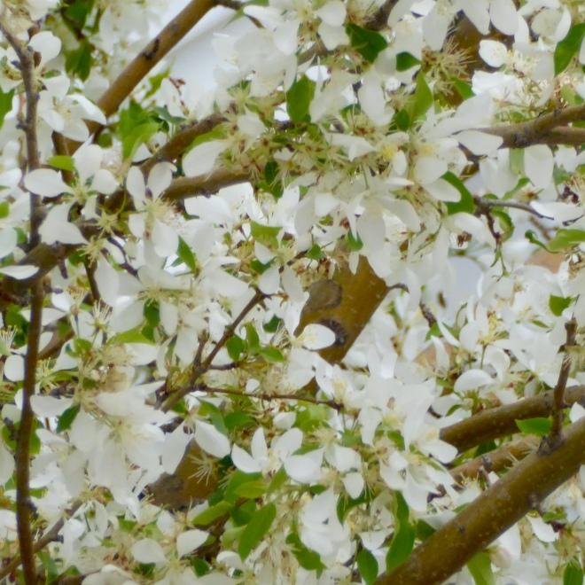 delicate individual petals