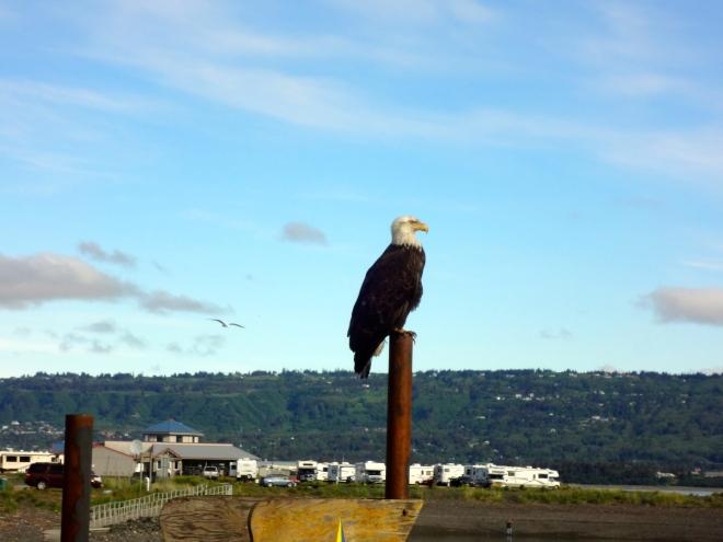 Proud American eagle
