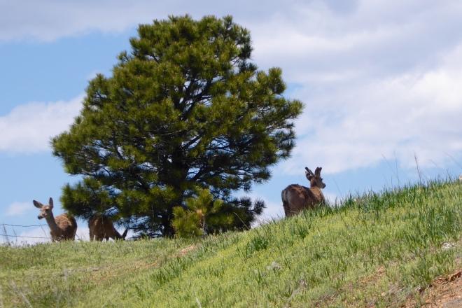 Deer enjoy serenity