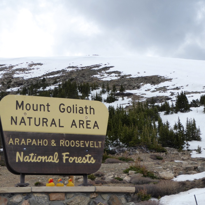 Mount Goliath Natural Area
