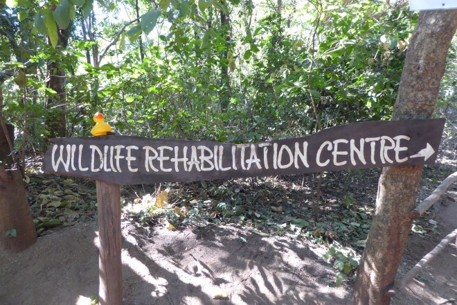 Lilongwe Wildlife Center is also a rehabilitation center