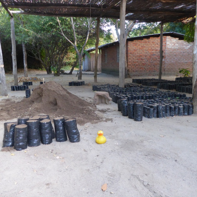 Bags of dirt to plant tree seedlings