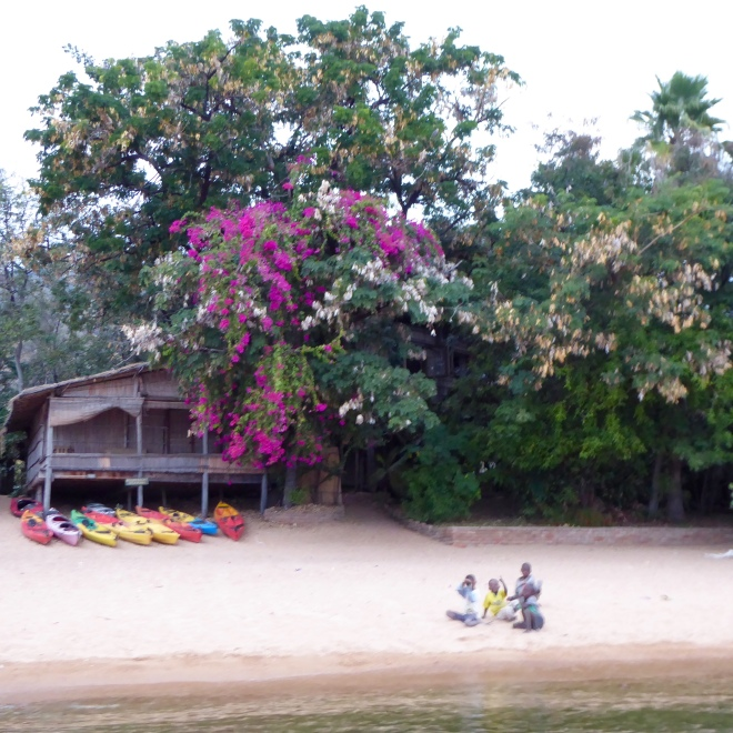 Colorful canoes and tree