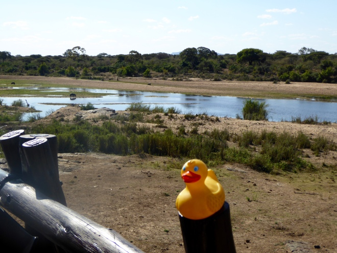 View of the river in Kruger National Park