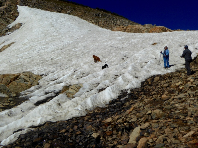 Dogs playing on glacier