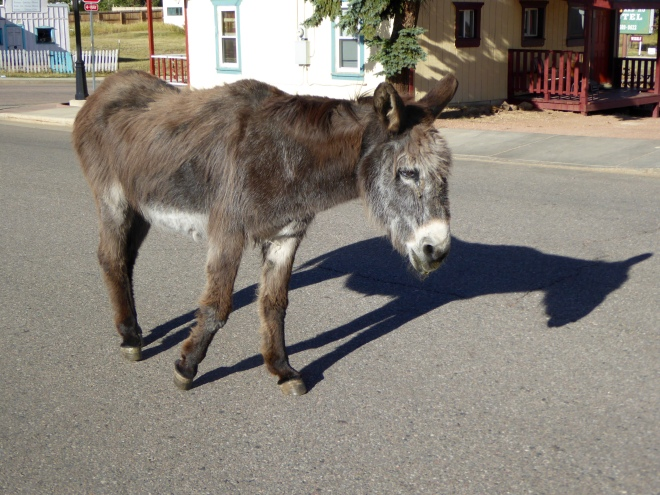 Donkey of Cripple Creek