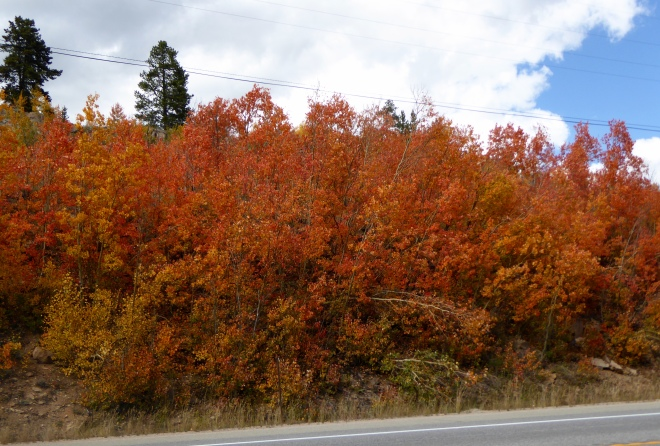 Red aspen