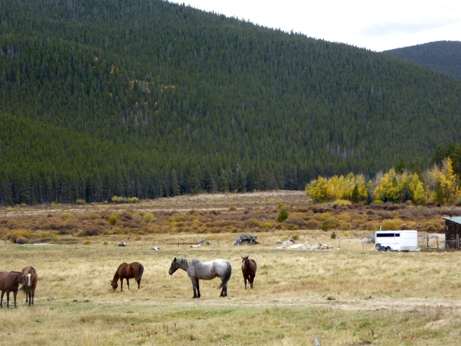 Mountains and horses.