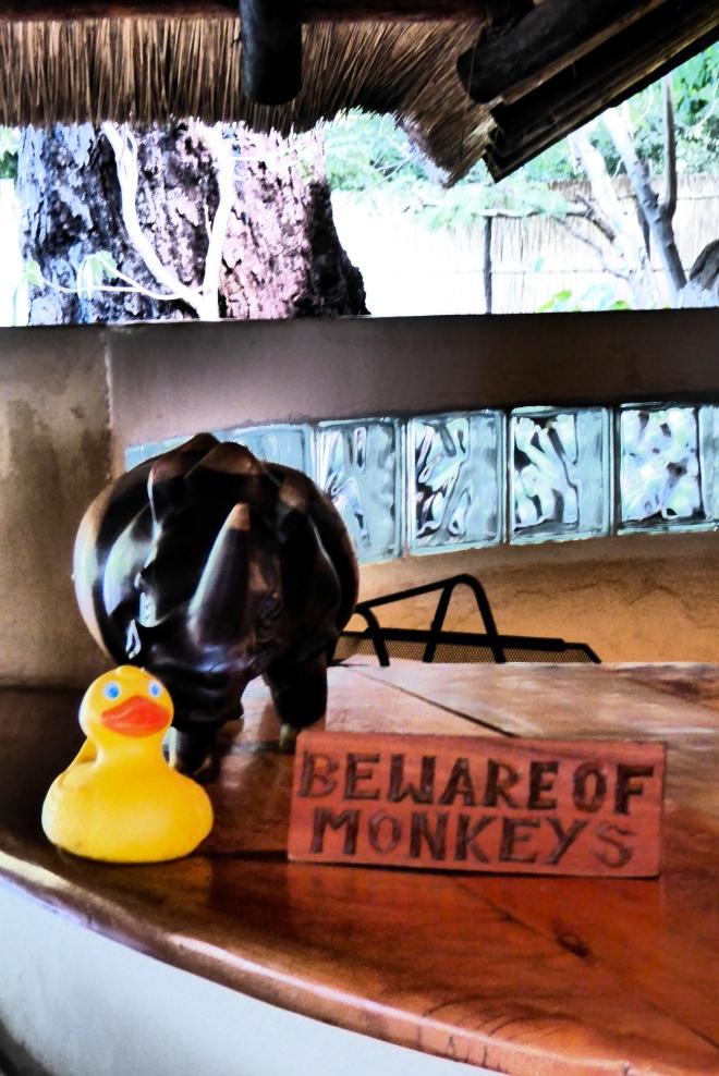The monkeys do take things