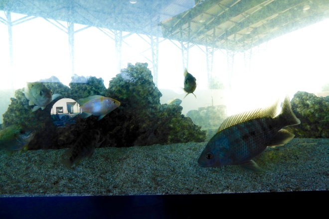 Fish inside tank