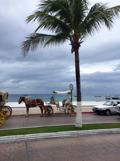 Horse drawn carriages in Cozumel, Mexico