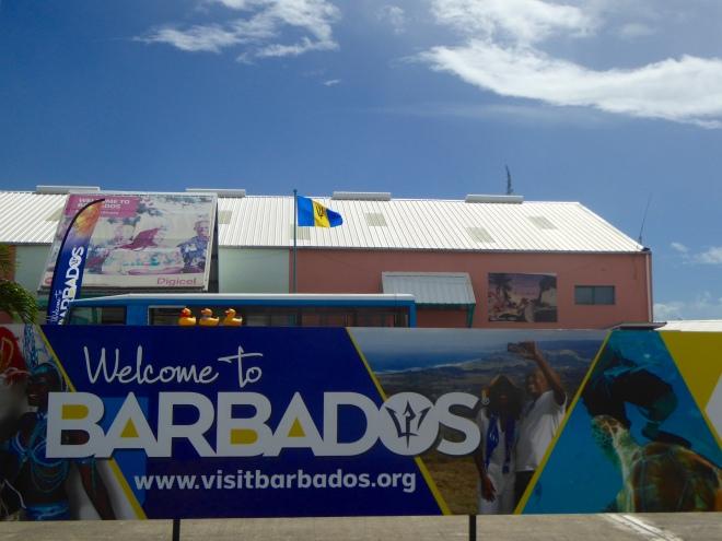 Colorado Traveling Ducks are in Barbados