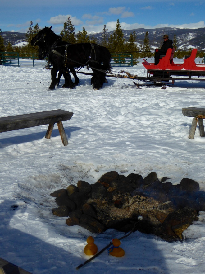 Roasting marshmallows with empty horse drawn sleigh behind.