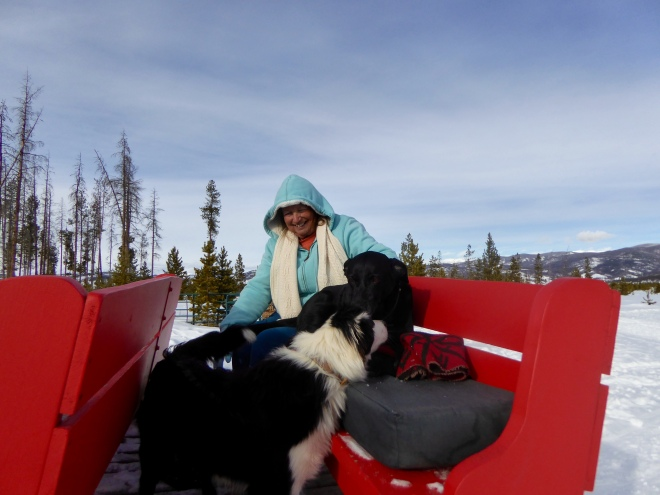 Chip and Stevie in the sled