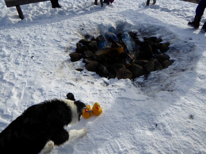 Colorado Traveling Ducks with Chip by the fire